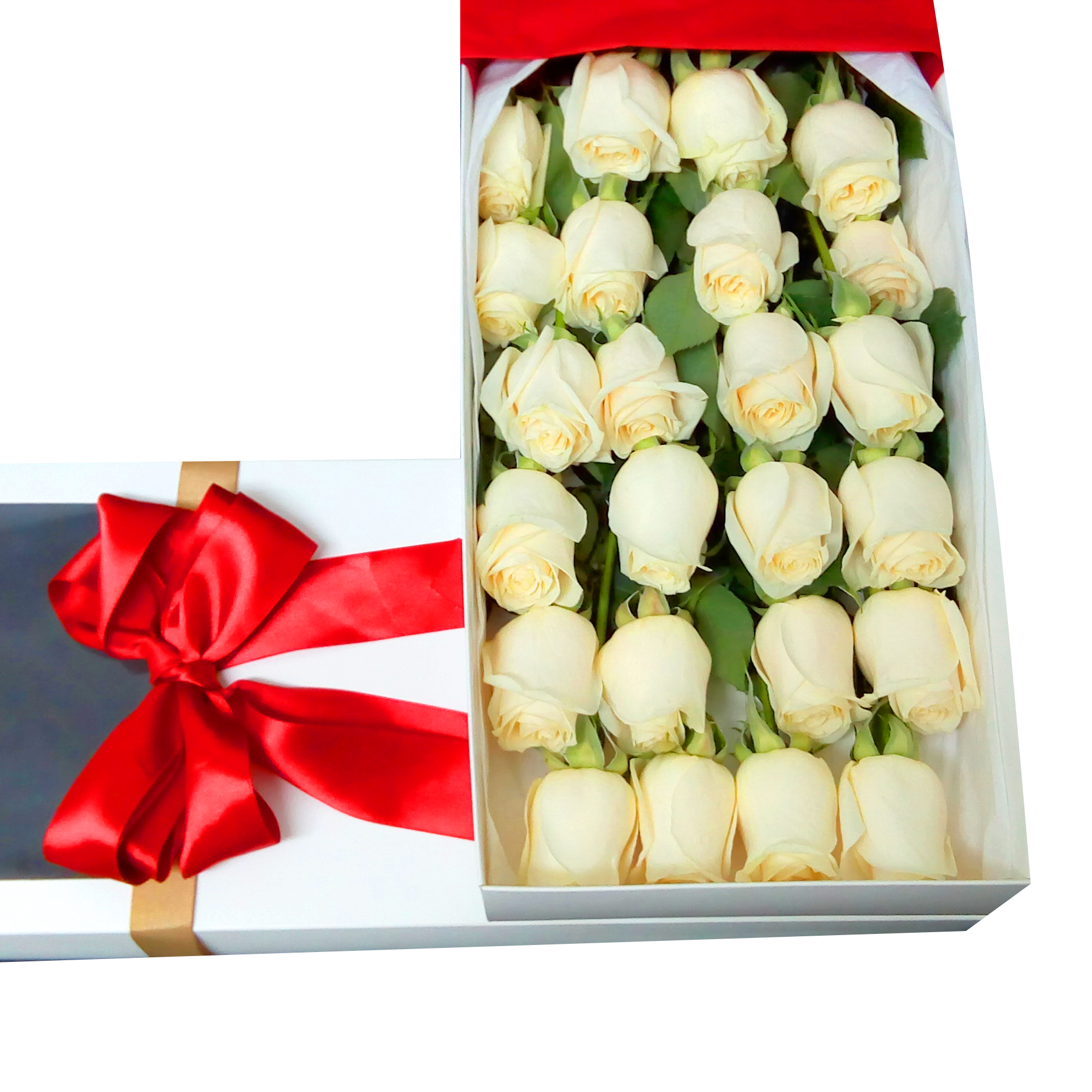 Caja de 24 bellas Rosas de color blanco