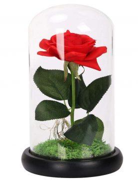 Elegante Rosa Preservada