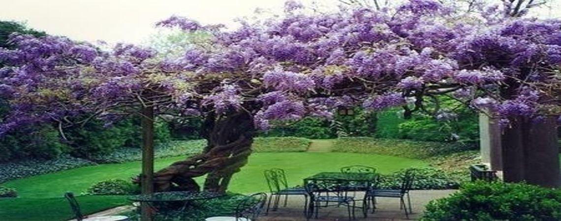 Flores a domicilio-Arreglos florales-Despacho de flores