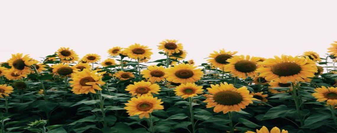 Flores a domicilio|Envía flores a domicilio|Despacho de flores a domicilio