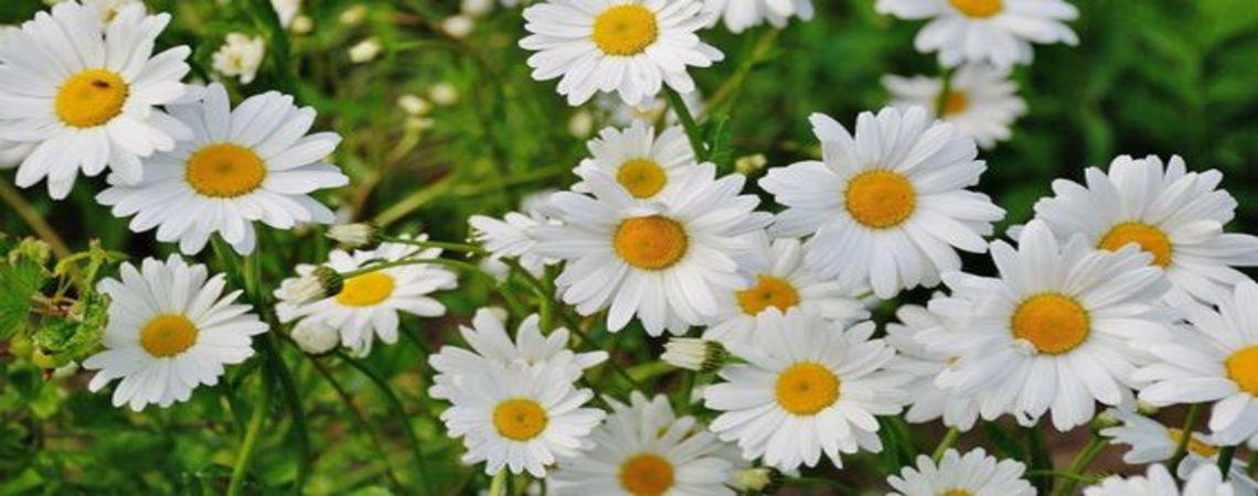 Las mejores flores blancas: Cuándo y a quién enviárselas